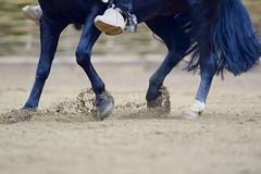 Un cheval Bleu Rodo 2016 Rancagua (Chile) (Photopinto) Tags: chile horses del america iso800 nikon media chili south du luna final rodeo sur 1800 cavalos 500mm champions sud competion chevaux f40 rancagua chevaliers d4 cavaleiros 2016 huasos cavallos rodo 5000mm carrerasdecavallo
