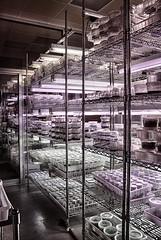 DSC04731-33_HDR (Capt Kodak) Tags: photomerge atlantabotanicalgarden dalechihuly glasssculpture chihulyinthegarden niksoftware hdrefexpro2 nikcollectionbygoogle everynowandthenyouneedalittleculture