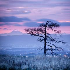 standing on the edge (D Cation) Tags: sunset tree night scotland moor benlomond gloaming eaglesham bonnyton