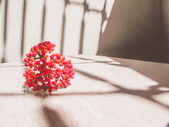 <3 (lainecris12) Tags: love nature nice shine heart designer amor natureza minimalismo valentinesday lightroom diadosnamorados vescocam