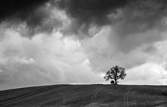 Cloudy.....Mono Version. (klythawk) Tags: white black nature lines clouds grey spring sony stormy nottinghamshire lonelytree 70200mm maplebeck klythawk a7ll