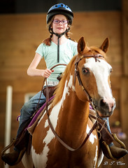 Show day-36 (Webbed Foot Photo) Tags: horses horse pennsylvania ponycamp webbedfootphotography pentaxk1 opengateranch darrenolsen dtolsen webbedfootphoto hunterhillsfarm