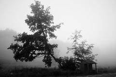 IMG_1962 (philippe2014) Tags: bus tree fog woods
