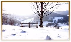 Schwarzwald (Ela2007) Tags: schnee snow bank landschaft schwarzwald menzenschwand