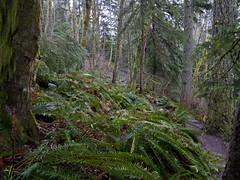 Rain Forest (Urban Disturbance) Tags: usa washington hiking pacificnorthwest oysterdome chuckanutdrive chuckanutmountains