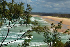 Windswept (blue foot) Tags: trees beach nature water surf waves australia foam newsouthwales headland fingalheads abigfave