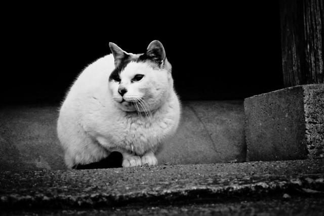 Today's Cat@2012-02-09