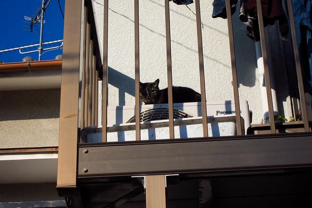 Today's Cat@2012-02-11