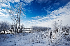 A Winter's Morning (mark_mullen) Tags: uk trees winter england cold english clouds rural landscape countryside frost hoarfrost scenic bluesky bridlington wintery eastyorkshire canon1740f4 northofengland whiteleaves grindale burtonfleming sharpfrost markmullenphotography grindalelane lee105mmcircularpolariser