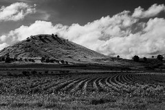 The Sister (D J Millard) Tags: bw cloud contrast rural blackwhite farm country hill australia qld crops cairns aus tablelands atherton canonef70200mmf28lisusm canoneos5dmkii