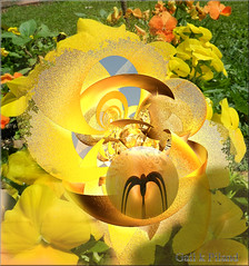 Fractal bug in the Pansies (gailpiland) Tags: yellow surreal balls bubbles sensational fractal pansies incendia awardtree gailpiland