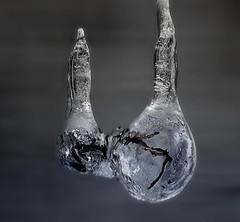 Frozen 4 (cees van gastel) Tags: winter ice nature frozen bevroren natuur closeups ijs canonef100400mmf4556lisusm ceesvangastel canon40d
