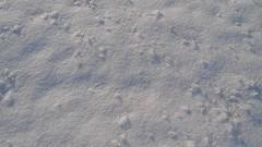 Creaky-creaky (coconinoco) Tags: winter camp walking shadows boots snowy footprints footsteps fen cambridgeshire effrasoundcomp creakycreaky