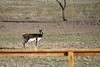 """BSR Blackbuck • <a style=""""font-size:0.8em;"""" href=""""http://www.flickr.com/photos/77680067@N06/6887863282/"""" target=""""_blank"""">View on Flickr</a>"""