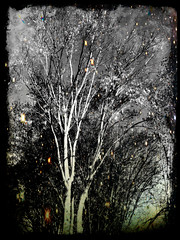 Tree Of The Faeries