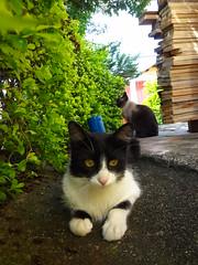 Tido & Bem (Alice Thomaz) Tags: cute cat gatos gato felino