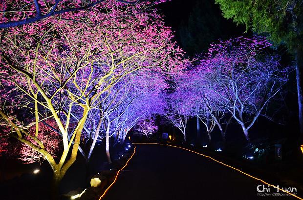 九族文化村櫻花祭17.jpg