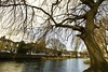 Canal tree (Steve-h) Tags: road longexposure trees ireland houses winter dublin motion blur cars water grass canon reeds naked lens canal europa europe traffic control zoom bare branches release tripod transport eu wideangle motionblur filter shutter wireless remote february grandcanal 2012 density variable neutral lightweight velbon mirrorlockup steveh canon1635mmf28liiusm canoneos5dmkii canoneos5dmk2 fadernd deletedartofimages wirelessremotecontrolshutterrelease faderndvariableneutraldensityfilter velbonlightweighttripod