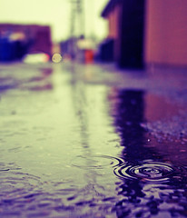 Another rainy day () Tags: street urban blur reflection wet water pool field rain puddle concrete photo washington alley view state pacific northwest image bokeh ripple district picture historic neighborhood drip rainy photograph alleyway local tacoma depth rainwater southtacomaway gritcity