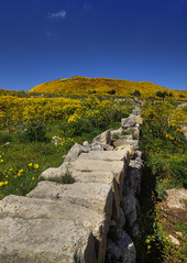 Yellow Hill (Vale Boy) Tags: yellow wall daisies canon hill malta cliffs crown polarizer 500d dingli valeboy cliverees