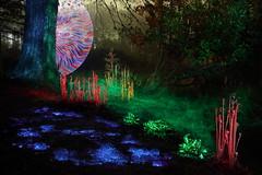 110/366 - Light Painting Another Landscape (tackyshack) Tags: blue light red lightpainting green painting lp paintingwithlight ferns gels dlw lightpainter leapyear elwire lightphotography project366 lightjunkie tackyshack teknobubbles uvlaser digitallightwand ©jeremyjackson