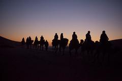 our caravan into the Sahara (marciabilyk) Tags: sunset desert adventure morocco journey caravan camels