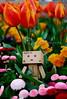 danbo_137 (iskandarbaik) Tags: park uk flowers england cute home bristol toy photography spring colorful colours bokeh outdoor manga cardboard tulip coloring daffodils hyacinth yotsuba danbo danbooru revoltech danboard cardbo danboru