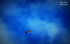 Fly away (Terezaki ) Tags: trip travel blue light vacation sky bird clouds skyscape landscape photography freedom scotland photo wings edinburgh day searchthebest scandinavia pictureperfect 2014 naturesfinest 100faves 50faves 100favs anawesomeshot flickrdiamond theperfectphotographer