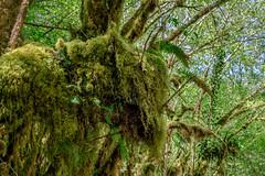 Le bison (Collabois) Tags: nikon cairn chemin mousse pyrnes fes fougres d600 randonnes baronnies dryades gourguedasque