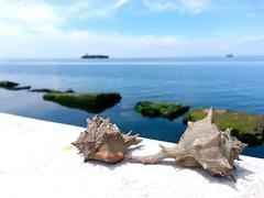 By the sea (agapi2) Tags: sea thessaloniki timeless sunnyday macedonian makedonia  macedoniagreece kalamariathessaloniki