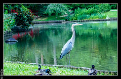 20160620Lumix1030409-2.jpg (hunter47d) Tags: lumix photoshoot dukegardens dpc