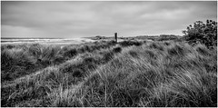 Sand dunes . (wayman2011) Tags: uk beach mono coast seaside flora dunes northumberland alnmouth grasses canon5d lightroom bwlandscapes wayman2011