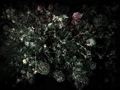 160616-6-3 (chrisfriel) Tags: flowers grave memorial friel