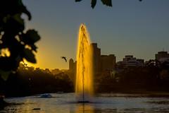 Sunrise fountain (dmunro100) Tags: summer lake water fountain sunrise canon eos dawn adelaide southaustralia goldenhour canonefs1755mmf28isusm 60d