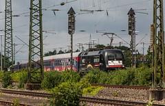 1202_2016_06_26_Gelsenkirchen_Hbf_MRCE_dispolok_ES_64_U2_-_036_DISPO_6182_536_182_536_HKX_Hamburg_Altona (ruhrpott.sprinter) Tags: railroad train germany logo deutschland day diesel outdoor zombie hamburg natur eisenbahn rail zug blumen db cargo nrw 111 passenger independence fret signal hbf gelsenkirchen ruhrgebiet freight mnster altona locomotives stellwerk lokomotive 182 146 wanneeickel sprinter ruhrpott 536 gter bte dispo 6182 mrce reisezug dispolok wiederkehr es64u2 ellok bahntouristikexpress hkx hamburgklnexpress