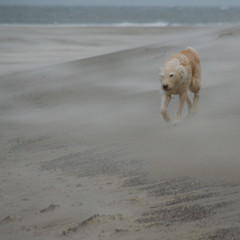 Out of the sand (Harry Mijland) Tags: dog max holland beach sand texel dearharry harrymijland