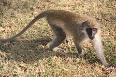 "Primates • <a style=""font-size:0.8em;"" href=""http://www.flickr.com/photos/57634067@N04/6783231140/"" target=""_blank"">View on Flickr</a>"