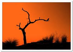 De sequa... (JorgeReina) Tags: color luz contraluz arbol landscapes nikon sombra paisaje aves colores cielo cordoba campo desierto pajaro tronco sombras sequa rusticas d300s flashman75