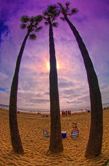 Three Palms (/\ltus) Tags: california pentax newportbeach socal orangecounty hdr k7 5xp
