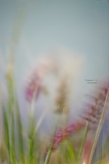 ~ (    , ) Tags: plant green nature canon purple wind softness windy calm doha qatar t3i  d600  qtr     600d      ameera   q6r    amoora