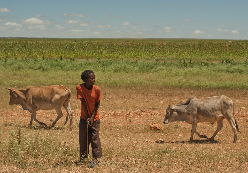 The World's Best Photos of ethiopia and ogaden - Flickr Hive Mind