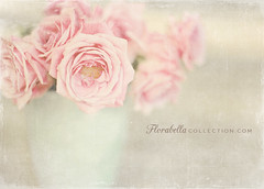 (Shana Rae {Florabella Collection}) Tags: pink roses whitewash shabbychic photoshopactions florabella