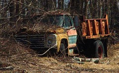 AN OLD FORD TRUCK AFTER A VERY LONG NAP IN MARCH 2012 (richie 59) Tags: trees winter usa ford abandoned overgrown america truck outside march us vines weeds rust automobile unitedstates country rusty dumptruck headlights grill faded rusted newyorkstate headlight oldtruck fords automobiles oldford obsolete 2012 fordtruck atwood nystate frontend hudsonvalley fomoco fordtrucks grills 2door junktruck fadedpaint oldtrucks dumptrucks ulstercounty rustyoldtruck twodoor americantruck oldfordtruck abandonedtruck oldfords midhudsonvalley fordmotorcompany rustyoldtrucks ulstercountyny 1960struck ustruck oldfordtrucks americantrucks junktrucks abandonedtrucks forddumptruck olddumptruck longabandoned rustyford richie59 rustyfordtruck march2012 1970strucks 1970struck 1960strucks townofmarbletownny townofmarbletown atwoodny march112012