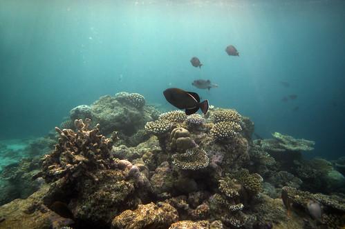 Diving Maldives: