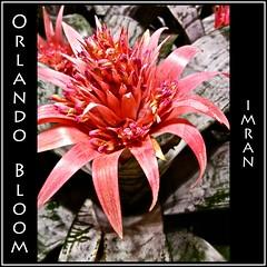 I Saw Orlando Bloom. Seriously! :-) - IMRAN -- Word Play + iPhone Photo - 600+ Views! (ImranAnwar) Tags: travel pink flowers green nature square orlando airport florida framed disney imran iphone imrananwar