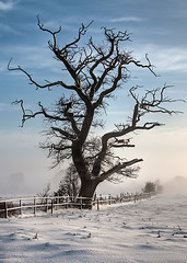 Winter's Grip (Gordon Mould) Tags: uk blue trees winter england white mist snow cold tree ice fence lens geotagged nikon flickr branch leicestershire branches kitlens kit woodhouse hdr loughborough lightroom 18105 d90 tonemapped 18105mm superaplus aplusphoto nikond90