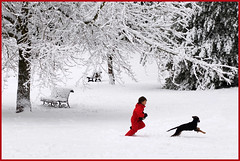 follow me (zio.paperino) Tags: schnee trees winter red italy dog white snow rome roma tree rot cane alberi bench fun rojo nikon funny europa europe italia child nieve happiness arbres bancos neve neige benches rosso bume bianco blanc banc panchina weis rouges bancs d90 ziopaperino mygearandme mygearandmepremium mygearandmebronze mygearandmesilver