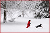 follow me (zio paperino) Tags: schnee trees winter red italy dog white snow rome roma tree rot cane alberi bench fun rojo nikon funny europa europe italia child nieve happiness arbres bancos neve neige benches rosso bäume bianco blanc banc panchina weis rouges bancs d90 ziopaperino mygearandme mygearandmepremium mygearandmebronze mygearandmesilver