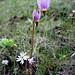 BLM_Botany_02