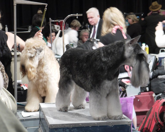 Westminster DOG SHOW_23